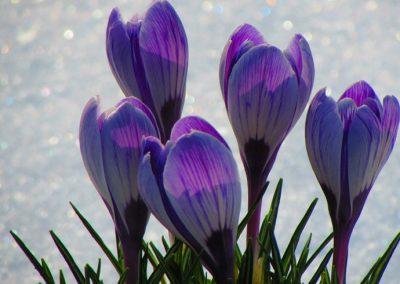 Spring Tryavna